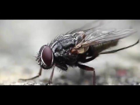 Өмірдің мәні (ең үздік бейне ролик) [Demo]