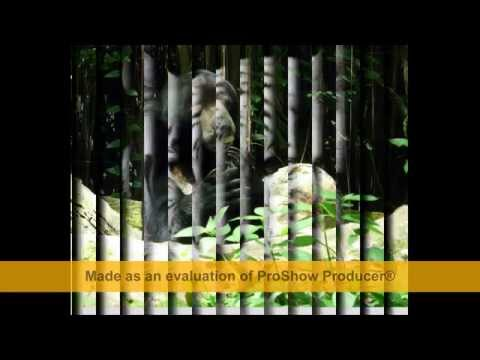 Singapore Zoo - universal studios singapore