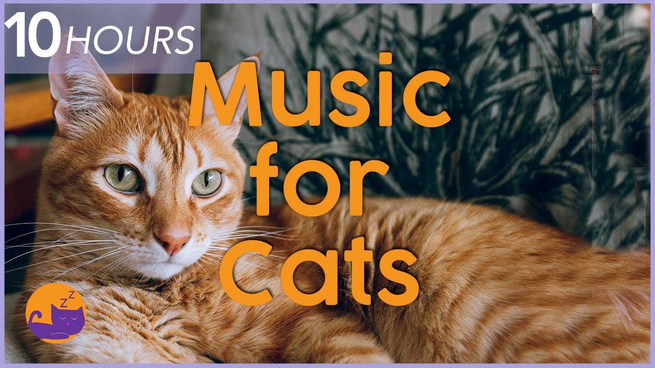 Music For Cats 10 Hour Relaxing Cat Music Playlist To Help Cats Sleep And Relax Youtube