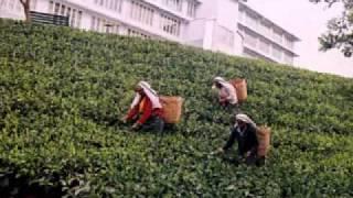 Heritance Tea Factory, Nuwara Eliya, Sri Lanka