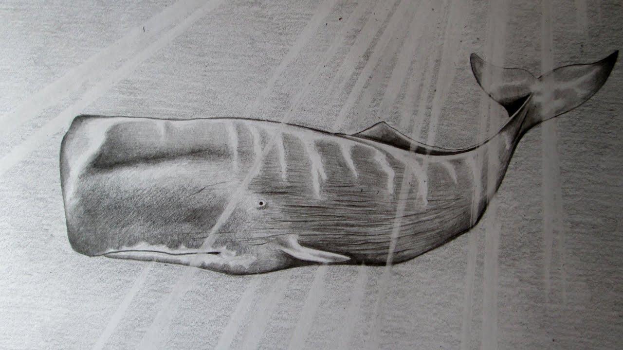 Cmo dibujar una ballena a lpiz paso a paso cmo dibujar