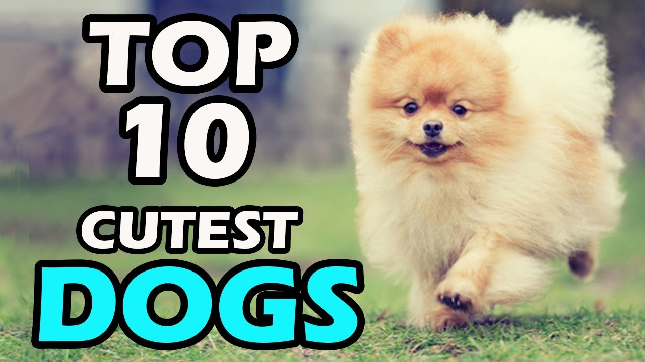 Most Expensive Dog Breeds in the World | Prudent Pet Insurance |The Most Smallest Dog In The World