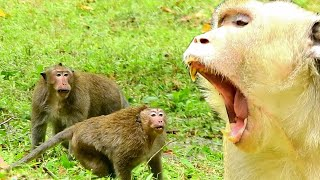Download Mp3 Terrify ! Sweetphea & Felix Angry Danky Cruelty, Monkey Attack Seriously Whi