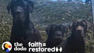 3 Huge Dogs Left On Mountain Kept Refusing To Be Rescued | The Dodo Faith = Restored