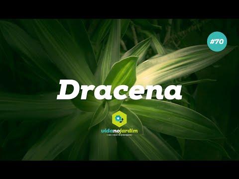 Dracena - Tipos e cultivo #70