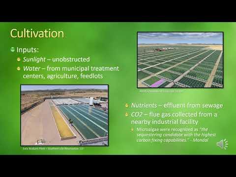 Biofuel From Microalgae