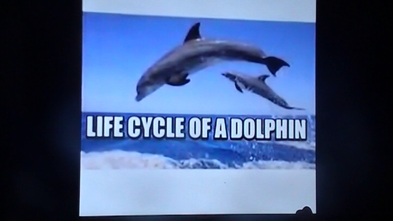 karmas presentation about the life cycle of a dolphin