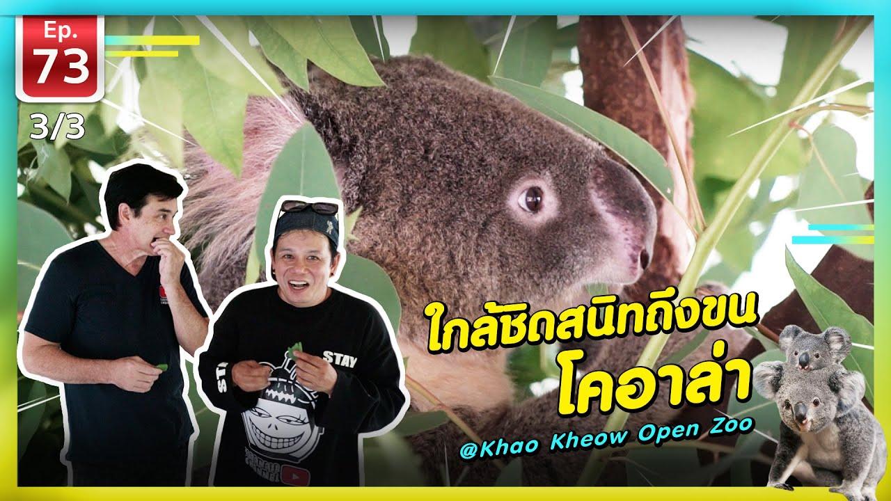 ใกล้ชิดสนิทถึงขน โคอาล่า @สวนสัตว์เปิดเขาเขียว - เพื่อนรักสัตว์เอ้ย EP.73 [3/3]