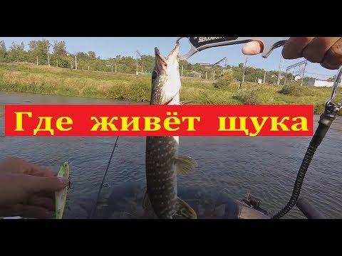 Где искать щуку в реке - Ловля на спиннинг