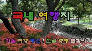 국내여행명소/상사화,꽃무릇/영광 불갑사/9월,10월 여…