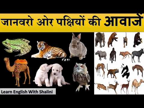 Animal  Names And Sounds Video For Kids |(जानवरो ओर पक्षियों की आवाज़े) By Shalini