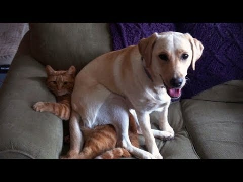 YOU will get a LAUGH ATTACK from watching these FUNNY CATS AND DOGS - Funny CAT & DOG compilation
