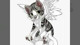 Котики с крыльями. Самые милые картинки. 😻😻😻