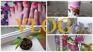 VLOG Будні Української мами Новий манікюр та педікюр Мої орхідеї Поповнення колекції орхідей