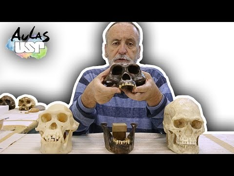A Saga da Humanidade -- Aula 4 (Sahelanthropus tchadensis)