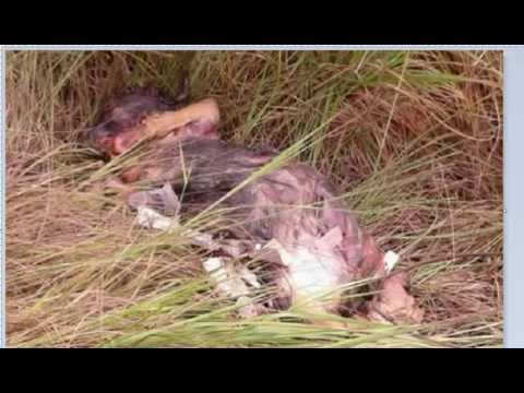 250 Men Trained To Poison Wells In Liberia - Tested Dog Actually Melted! Worse Than Ebola