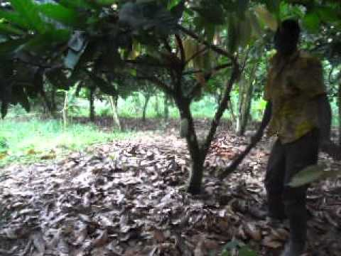 EXPEDITION TO THE COCOA FARM: THE MEMORIES OF THE LATE GERTRAUD MOMBURG