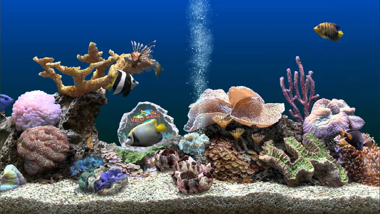 Marine Aquarium 3 screensaver Awesome beauty and visuals