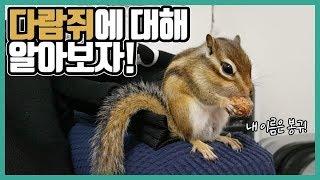 다람쥐 키우기 전에 꼭 봐야 하는 영상!