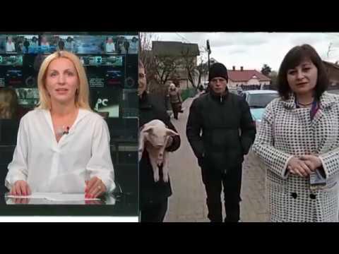 ТРК Аверс: Порошенку у Косові підсунули свиню