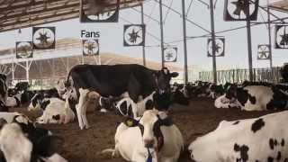 Flourish Dairy Farm Video