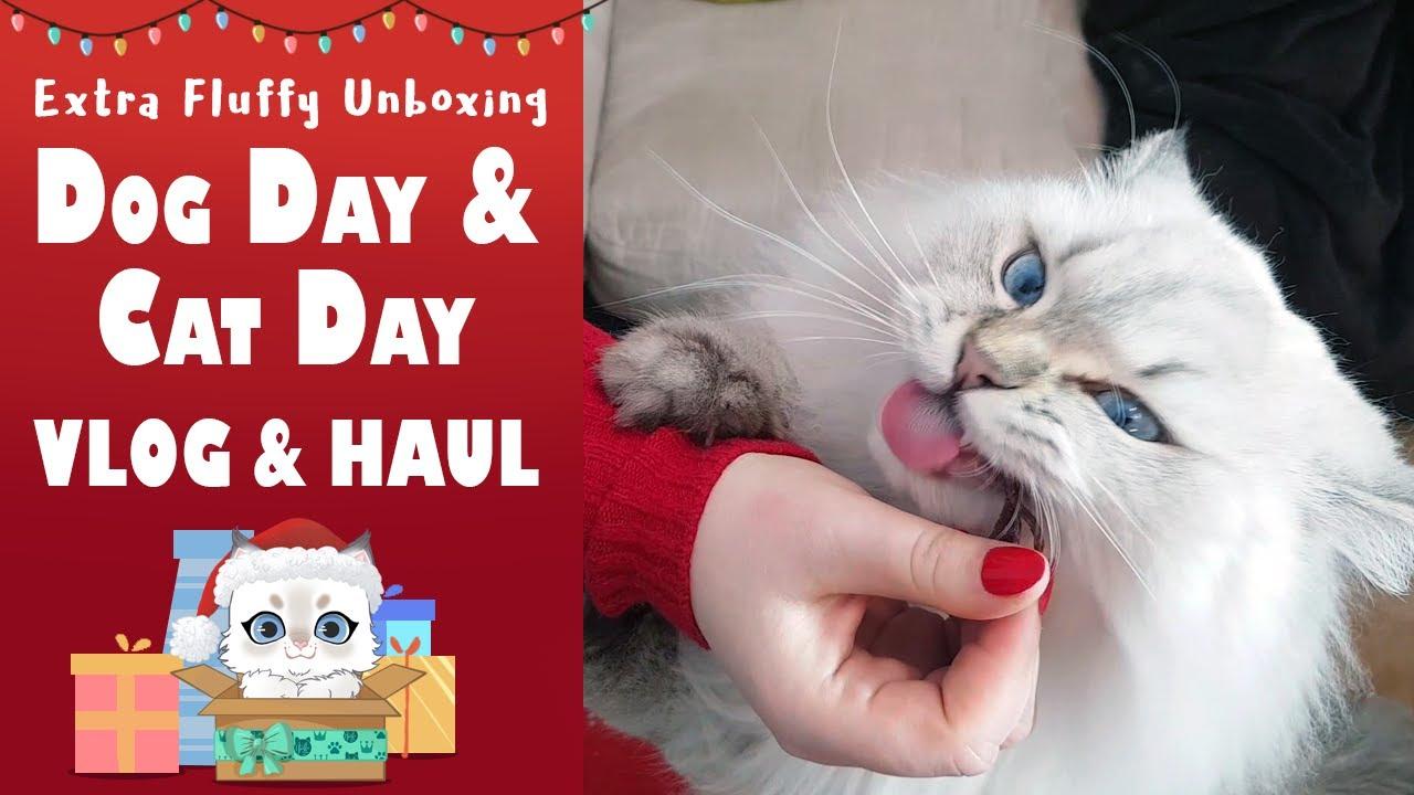 Dog & Cat Day 2019 Vlog + Haul zakupowy 😺 Extra Fluffy Unboxing 🎁