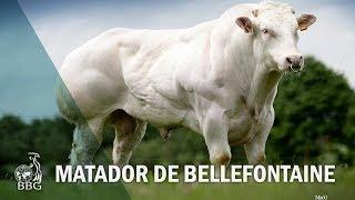 MATADOR DE BELLEFONTAINE - Portes ouvertes BBG 2017