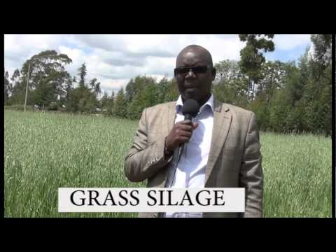 GRASS SILAGE;  GROWING AND MAINTAINING -farmers check