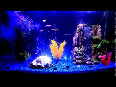 How To Clean A Freshwater Aquarium (Simple, Cheap, Fast)