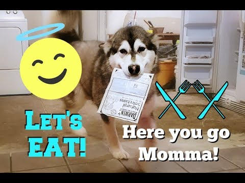 my-dogs-|-help-put-their-food-away-|-ask-to-eat