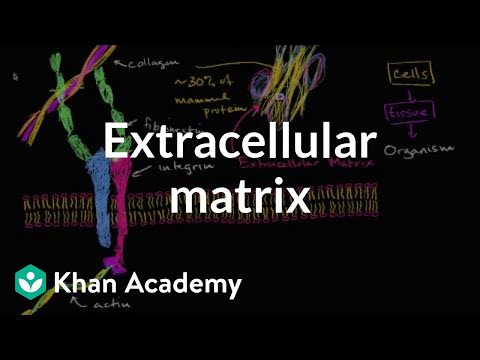 Extracellular matrix | Structure of a cell | Biology | Khan