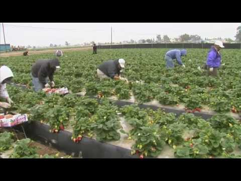 Climate Change And Agriculture: America's Heartland