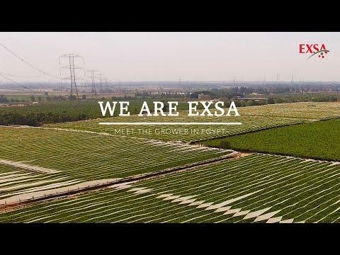 Meet the grower in Egypt - EXSA Europe | Watch in 4K
