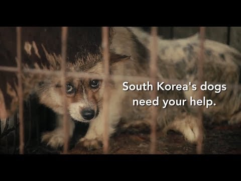 Dog Meat Trade in South Korea during 2018 Olympics