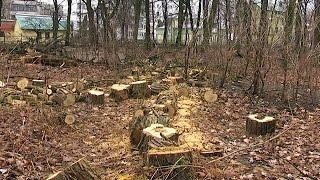 У міському парку Коломиї вирубують дерева(Хто вирубує дерева? У міському парку на вулиці Чехова стало менше зелених насаджень. Активісти зацікавилис..., 2016-02-21T16:19:12.000Z)