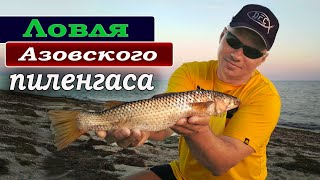 Ловля пеленгаса в Азовском море