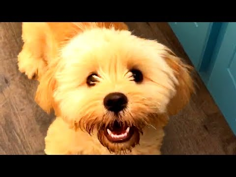 The Best Cute and Funny Dog Videos of the Week! ?