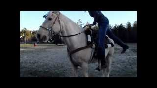 Tennessee Walking Horse Running 19 Seconds.