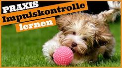 Hund Impulskontrolle Übungen I So lernt dein Hund Selbstbeherrschung I Praktische Beispiele