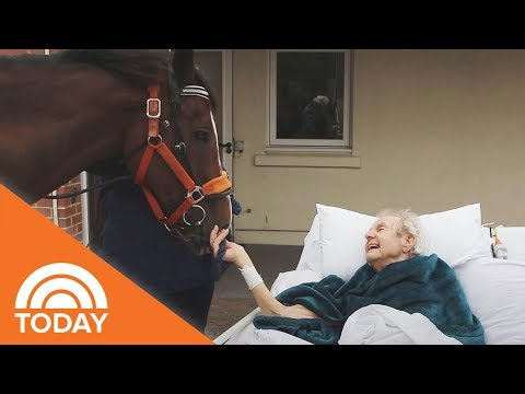 Family Brings Horse To Hospice Center To Surprise Dying Man | TODAY