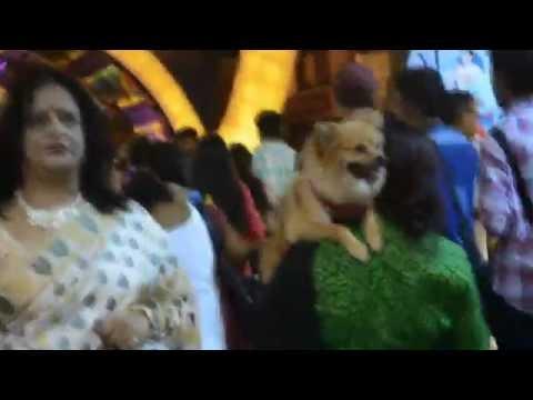 CUTEST SIGHT SEEN IN KOLKATA DURGA PUJA 2016 (CARRYING DOG LIKE BABY)