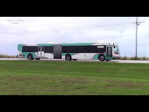Palm Tran Gillig and New Flyer Buses in action