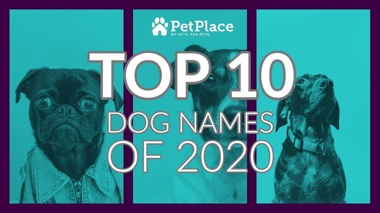 Top 1200 Pet Names Petplace