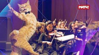 Коты поют гимн Лиги чемпионов | Cats sing UEFA Champions League song