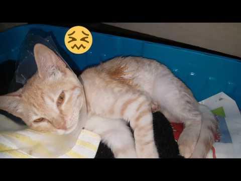 My Little Kitten screaming in pain & is sick!!! :(