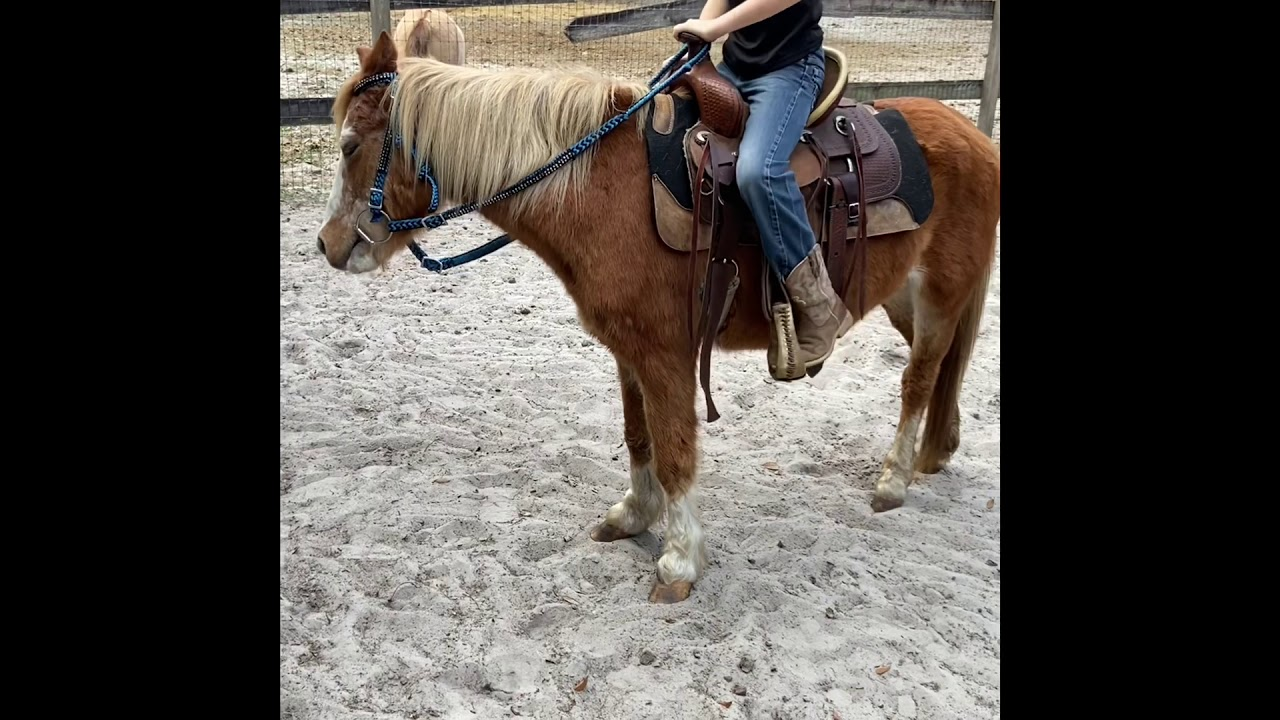 """""""Lucy"""" bombproof pony mare"""