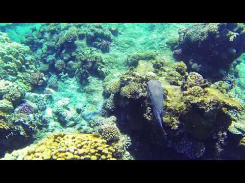 Das Albatros Citadel - Hausriff Teil 1 - Schwärme und Anemonenfische Juni 2019из YouTube · Длительность: 4 мин21 с