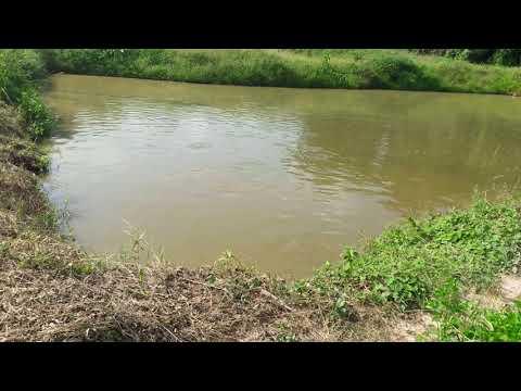 Bombisco tv in Berekum kato Brong-Ahafo Ghana