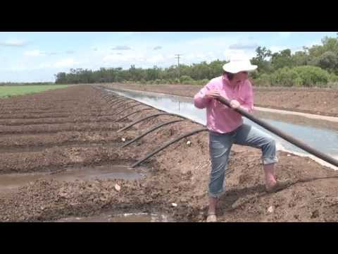 Irrigating with siphons