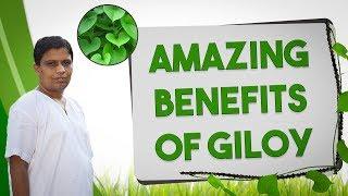 Amazing Benefits of Giloy
